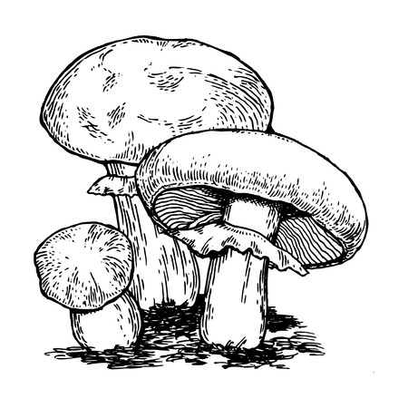 Illustration for Mushrooms. - Royalty Free Image