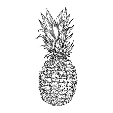 Illustration pour Pineapple fruit engraving vector illustration. Scratch board style imitation. Hand drawn image. - image libre de droit