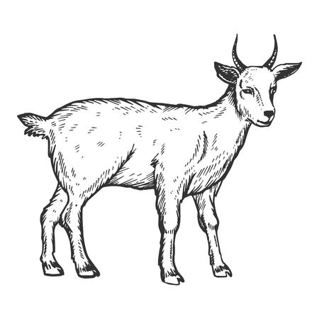Ilustración de Goat farm animal engraving vector illustration - Imagen libre de derechos