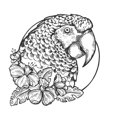 Ilustración de Parrot bird head animal engraving vector illustration. Scratch board style imitation. Black and white hand drawn image. - Imagen libre de derechos