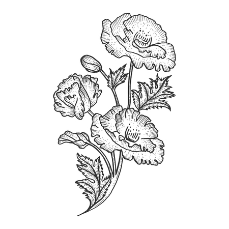 Illustration for Poppy flower plant sketch engraving vector illustration. Scratch board style imitation. Black and white hand drawn image. - Royalty Free Image