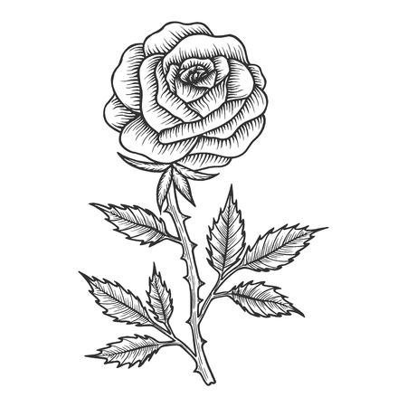 Ilustración de Rose flower sketch engraving vector illustration. Scratch board style imitation. Black and white hand drawn image. - Imagen libre de derechos
