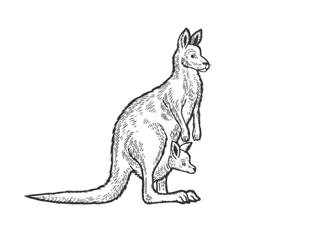Illustration for Kangaroo with baby cub in kangaroo pouch animal sketch engraving vector illustration. Scratch board style imitation. Black and white hand drawn image. - Royalty Free Image
