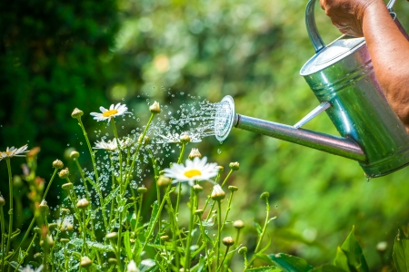 Photo pour Watering flowers with a watering can - image libre de droit