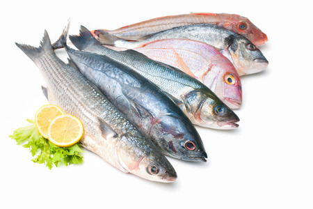 Foto de Fresh catch of fish  isolated on white  - Imagen libre de derechos