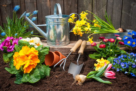 Foto de Planting flowers in pot with dirt or soil at back yard - Imagen libre de derechos