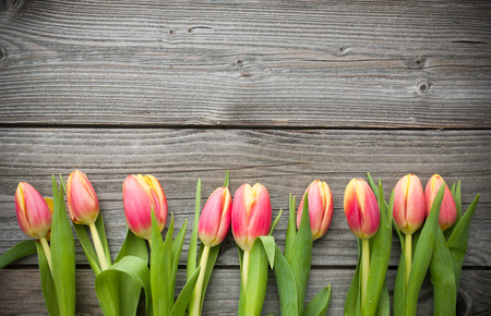 Photo for fresh tulips arranged on old wooden background with copy space for your message - Royalty Free Image