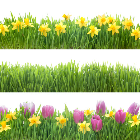 Photo for Green grass and spring flowers isolated on white background - Royalty Free Image