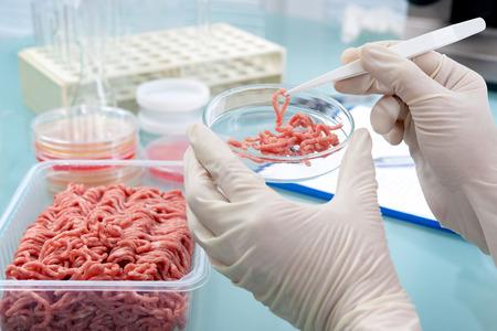 Photo pour Food quality control expert inspecting at meat specimen in the laboratory - image libre de droit
