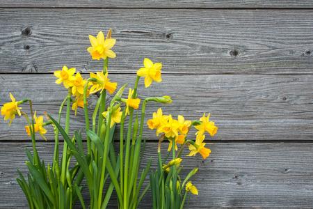 Foto de Spring daffodils against old wooden background - Imagen libre de derechos