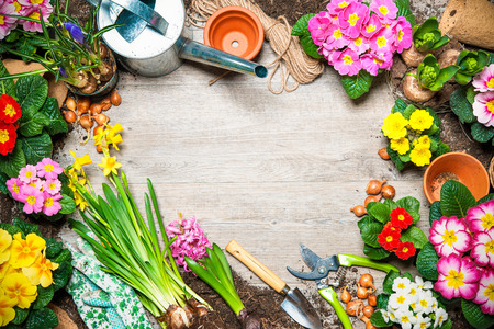 Photo for Frame of spring flower and gardening tools on old wooden background - Royalty Free Image