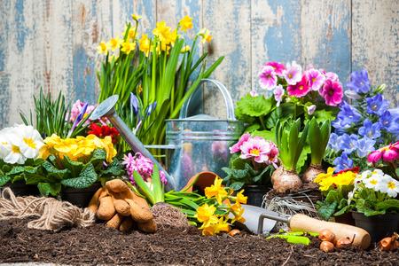 Foto de Gardening tools and flowers in the garden - Imagen libre de derechos