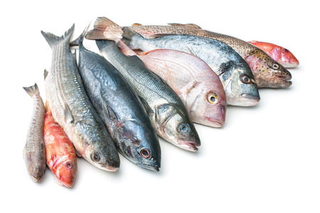Fresh catch of fish and other seafood isolated on white background