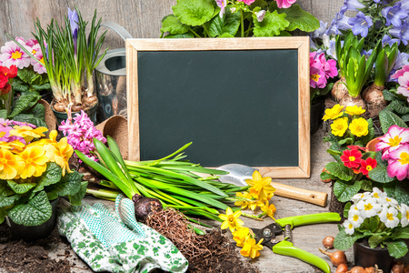 Gardening tools and flowers with a blank board for your text