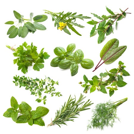 Photo pour Kitchen herbs collection isolated on white background - image libre de droit