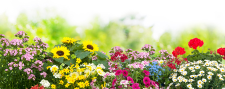 Foto de Background with the summer flowers in garden - Imagen libre de derechos