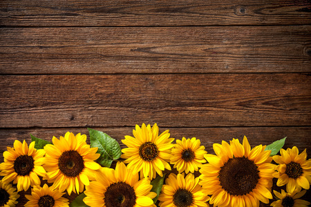 Photo for Autumn background with sunflowers on wooden board - Royalty Free Image