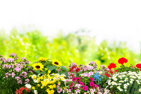 Photo for Background with the summer flowers in garden - Royalty Free Image