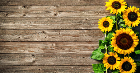 Photo pour Autumn background with sunflowers on wooden board - image libre de droit