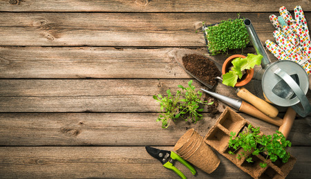 Photo pour Gardening tools, seeds and soil on wooden table. Spring in the garden - image libre de droit
