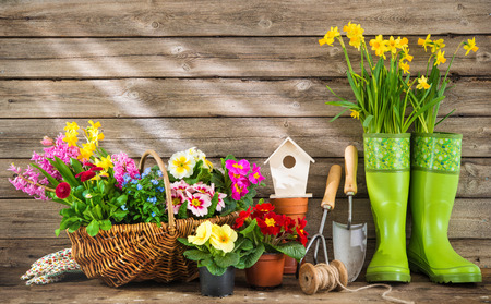 Gardening tools and spring flowers on wooden background