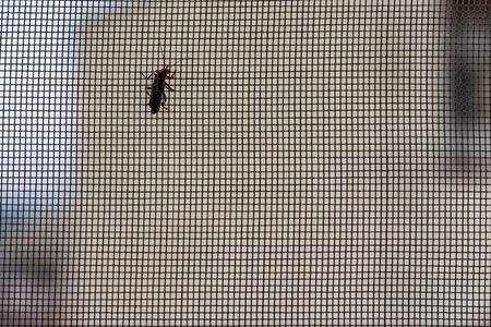 Foto de Mosquito net and an insect - Imagen libre de derechos