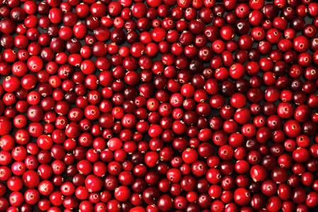 Photo for Ripe cranberries for background - Royalty Free Image