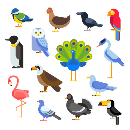 Illustration pour Birds vector set. Birds illustration. Egle, parrot. Pigeon and toucan. Bird collection. Penguins, flamingos. Crows and peacocks. Black grouse, chicken. Sofa and heron - image libre de droit