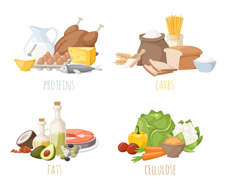Illustration for Healthy nutrition, proteins fats carbohydrates balanced diet, cooking, culinary and food concept vector. Healthy nutrition proteins fats carbohydrates vegetables fruits, meat and healthy nutrition. - Royalty Free Image