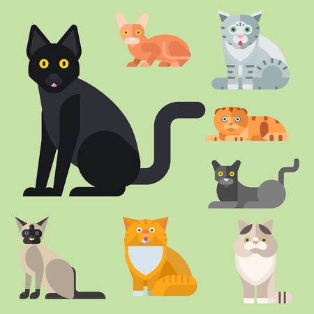 Illustrazione per Cats vector illustration cute animal funny decorative kitty characters feline domestic kitten trendy pet drawn - Immagini Royalty Free