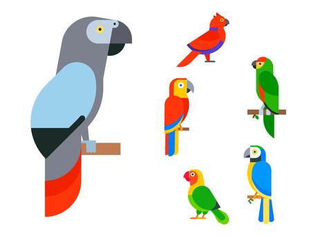 Ilustración de Parrots birds breed species and animal nature vector illustration. - Imagen libre de derechos