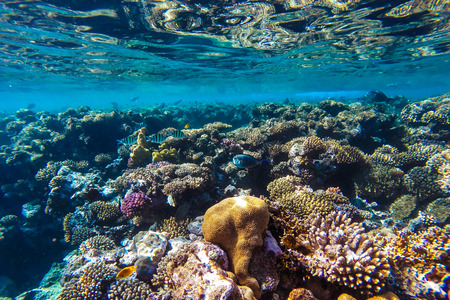 Photo pour red sea coral reef with hard corals, fishes and sunny sky shining through clean water - underwater photo - image libre de droit