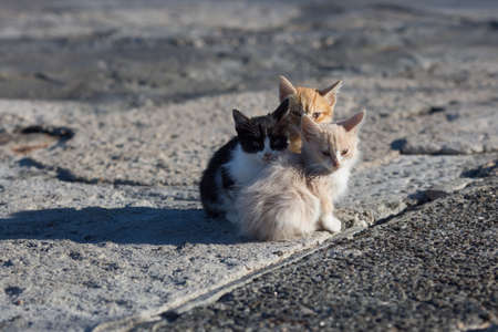 Foto de Homeless animals. Group homeless kittens on concrete pier in sea port - Imagen libre de derechos
