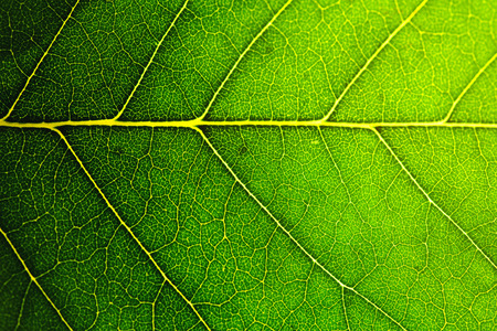 Photo for leaf macro shot, shallow DOF - Royalty Free Image