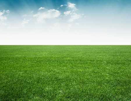 Photo for green field and blue sky,green grass under blue sky - Royalty Free Image