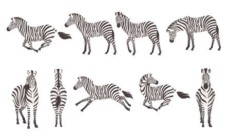 Illustration pour Set of african zebra side and front view cartoon animal design flat vector illustration isolated on white background. - image libre de droit