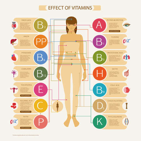 Illustration pour The greatest influence on the organs and systems of the human body. Visual scheme with the scientific name and a brief description of the action of essential vitamins necessary for human health. - image libre de droit