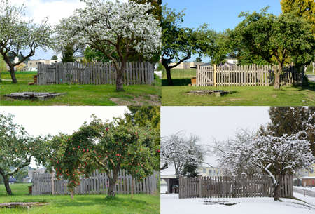 Photo for old apple tree in all four seasons from the same perspective - Royalty Free Image