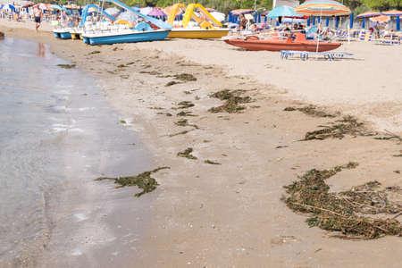 Foto de Bathing beach full of seaweed and algae - a beach holiday by the sea - Imagen libre de derechos