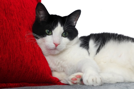 cat With Red Pillow