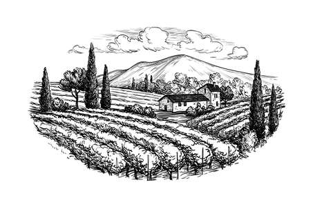 Ilustración de Hand drawn vineyard landscape. Isolated on white background. Vintage style vector illustration. - Imagen libre de derechos