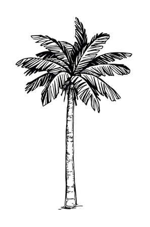 Illustration pour Coconut palm tree - image libre de droit