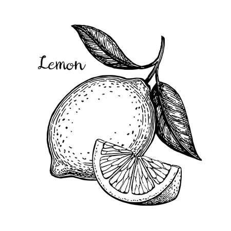 Ilustración de Hand drawn vector illustration of lemon. Isolated on white background. Retro style. - Imagen libre de derechos