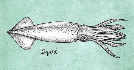 Illustration pour Squid ink sketch on old paper. - image libre de droit