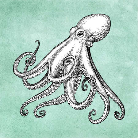 Illustration for Octopus ink sketch on old paper background. Hand drawn vector illustration. Retro style. - Royalty Free Image