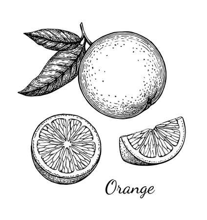 Illustration for Orange set. Isolated on white background. Hand drawn vector illustration. Retro style ink sketch . - Royalty Free Image