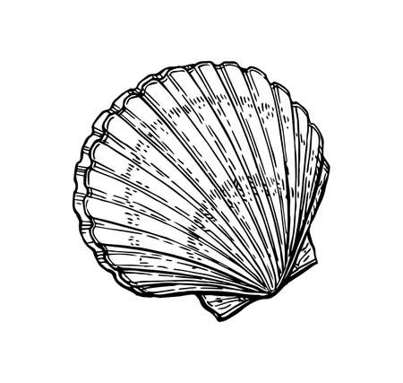 Illustration pour Scallops ink sketch. Isolated on white background. Hand drawn vector illustration. Retro style. - image libre de droit