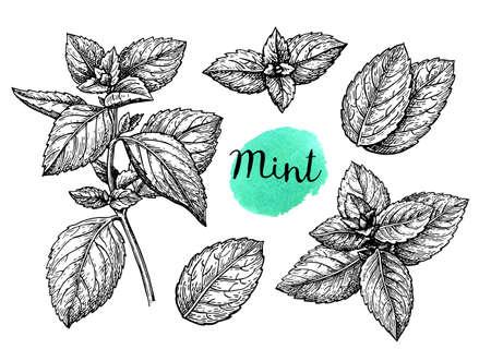 Ilustración de Retro style ink sketch of mint. Isolated on white background. Hand drawn vector illustration. - Imagen libre de derechos