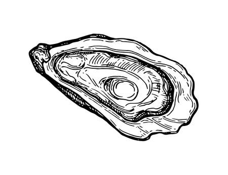 Illustration pour Oyster ink sketch. - image libre de droit
