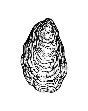 Illustration pour Oyster shell ink sketch. - image libre de droit